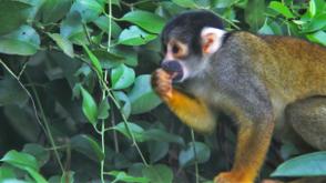 Machu Picchu & Manu Biosphere Wildlife Reserve